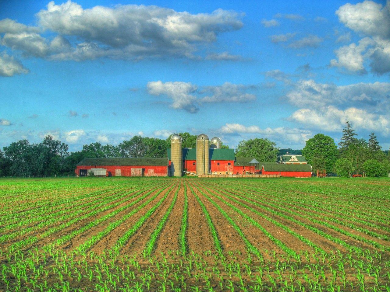 Simplicity is Happiness Farmhouse wallpaper, Farm