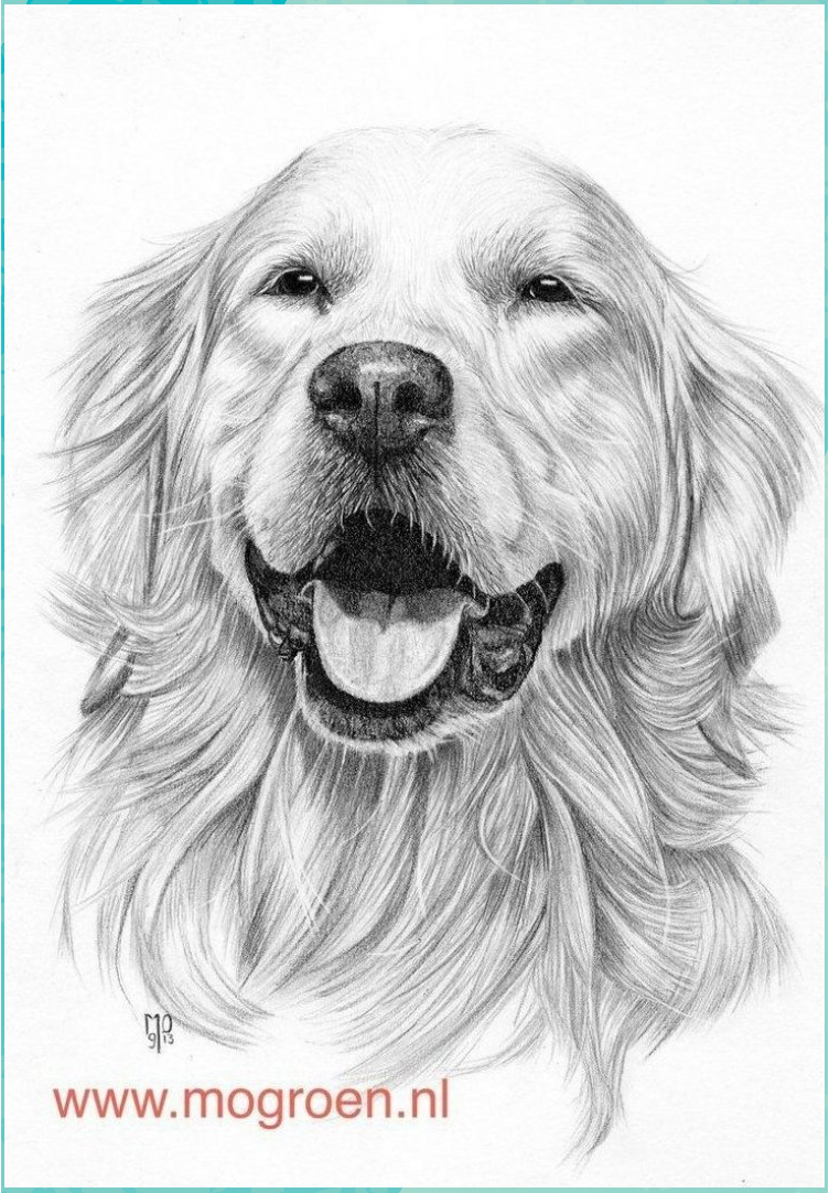 Golden Retriever Coloring Page Coloring Pages Draw A Golden Retriever Drawing Mo62 On Deviantart In 2020 Golden Retriever Drawing Dog Pencil Drawing Cute Dog Drawing
