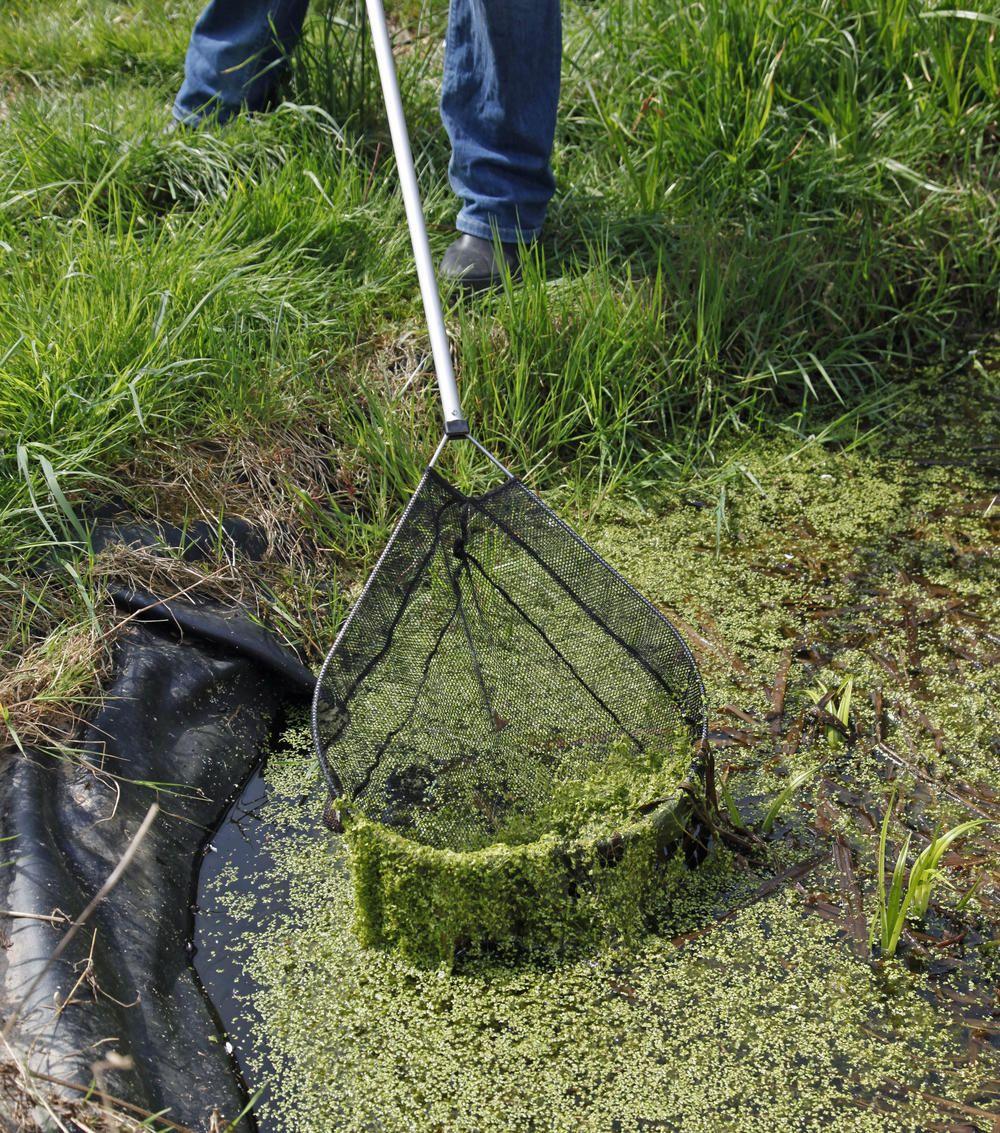 Teichpflege die besten tipps f r mehr freude am for Gartenteich algen entfernen