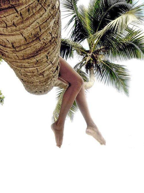 Sedím na strome a je mi dobre. Dominikánska rep. dovolenka zájazdy last minute viawebtour: http://goo.gl/gqkZjT