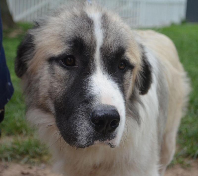 Large Dog Adoption Colorado