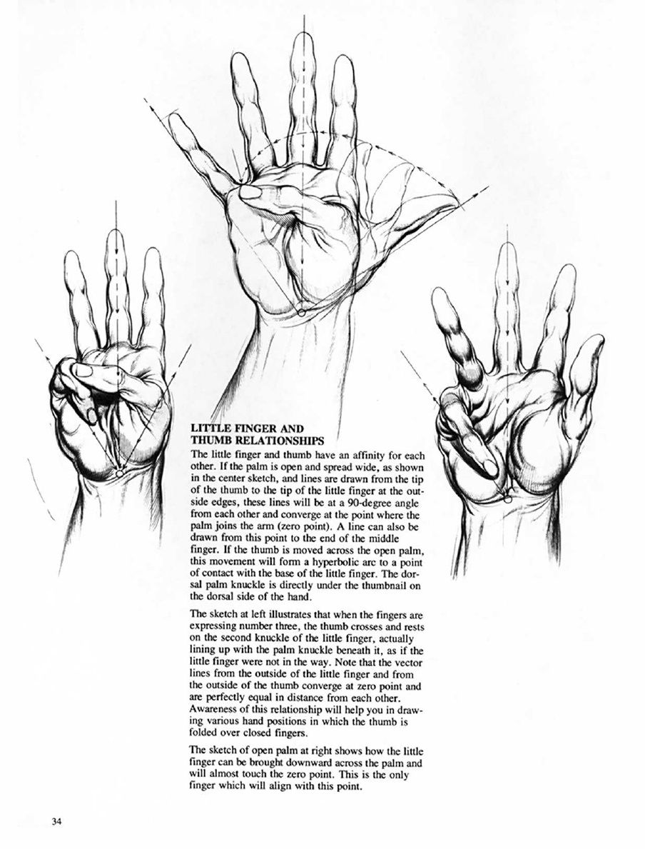 Drawing Dynamic Hands Burne Hogarth Pdf Human Anatomy Drawing