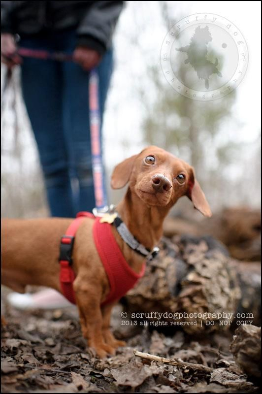 On Trial Rolo Came To Cdr From A Shelter In The Usa Found As A