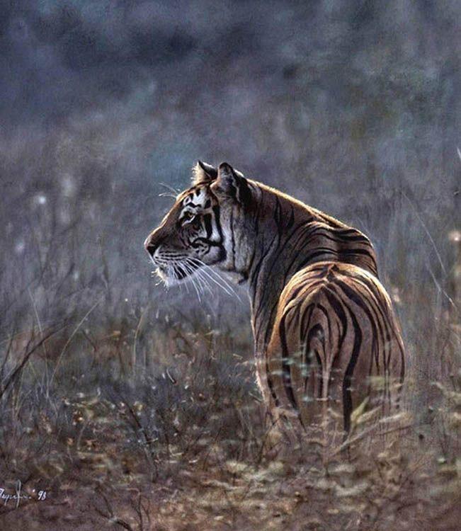 Denis Mayer Morning Majesty Siberian Tiger