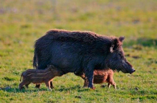 Establecidos los períodos hábiles de caza para esta temporada en la Región de Murcia
