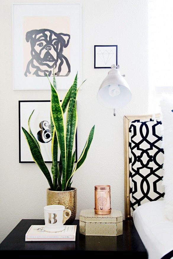 plant on bedside table