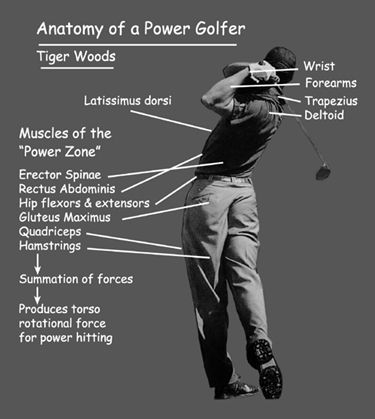 Anatomy of a golfer | Golf | Pinterest
