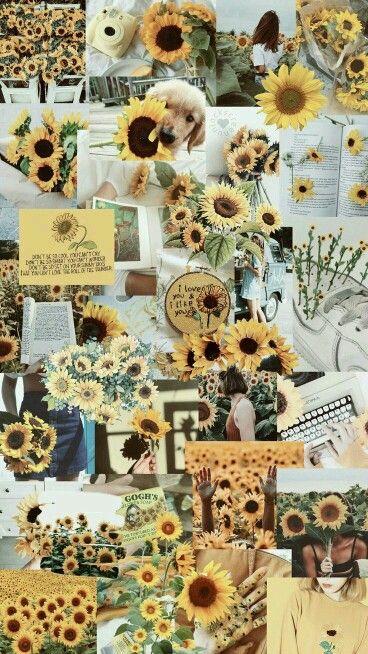 Cvety Girasoles Fondos De Papel Tapiz Amarillo Papel Pintado
