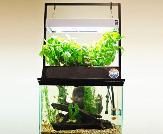 Eco cycle aquaponics kit turns any 20 gallon aquarium into for Fish tank hydroponic garden
