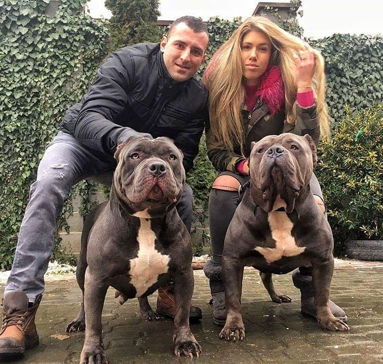 Image May Contain 2 People Dog And Outdoor American Bully Dog Kennel Bully Xxl
