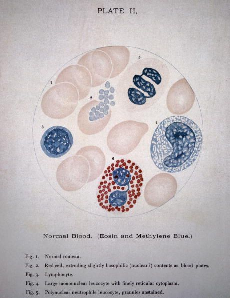 Plate II from the 'Clinical Pathology of the Blood' written by J Ewing and published in 1901 The plate illustrates a variety of normal blood cells seen through a microscope.