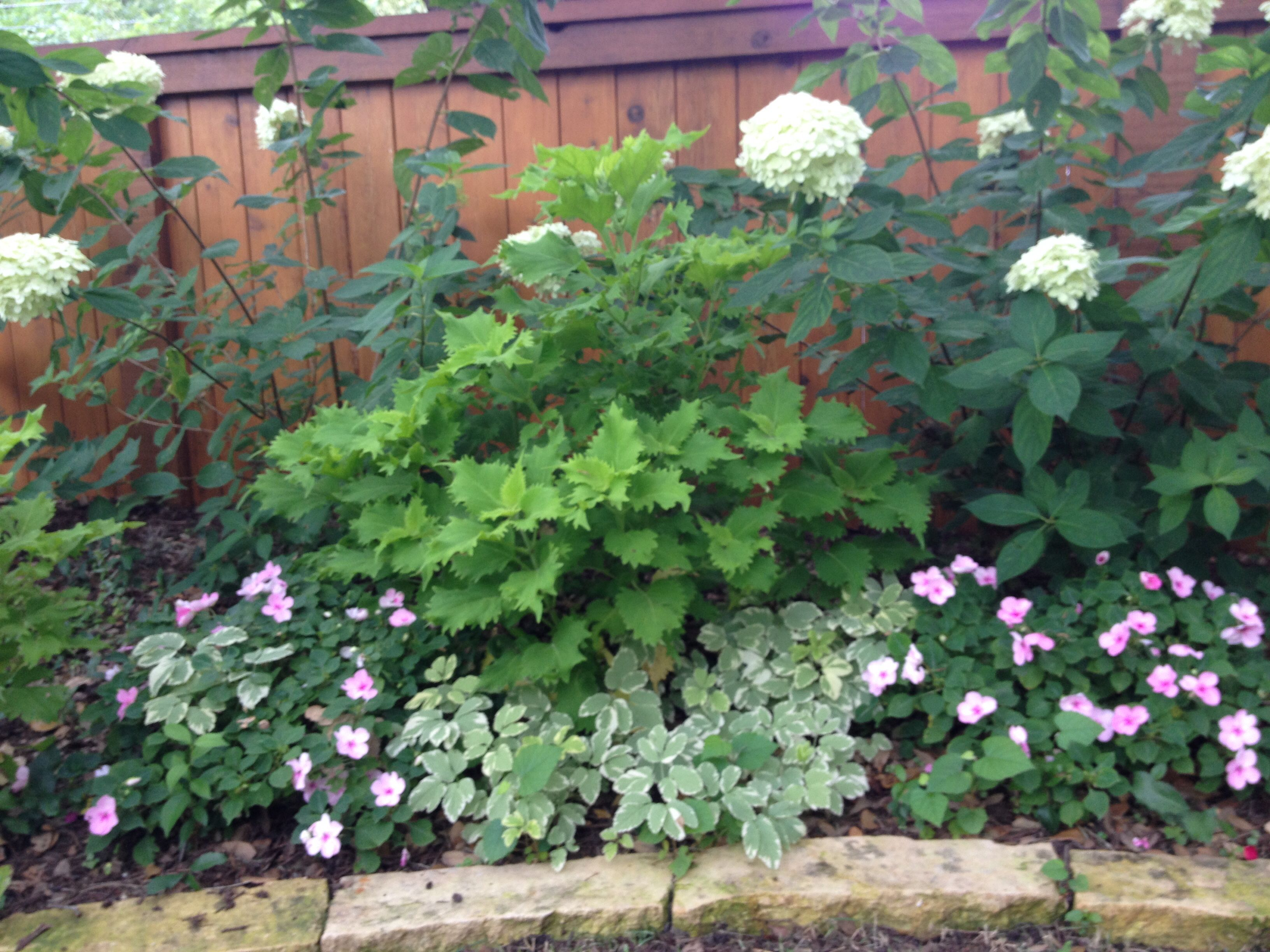 Find This Pin And More On Shade Garden Plants U0026 Ideas By Cityfloral.