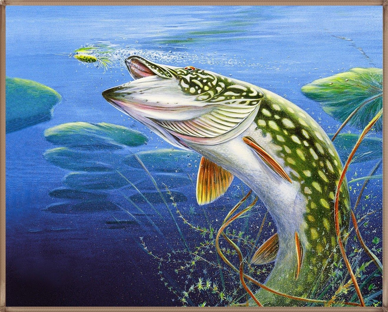 Hd Trout Fish Wallpapers