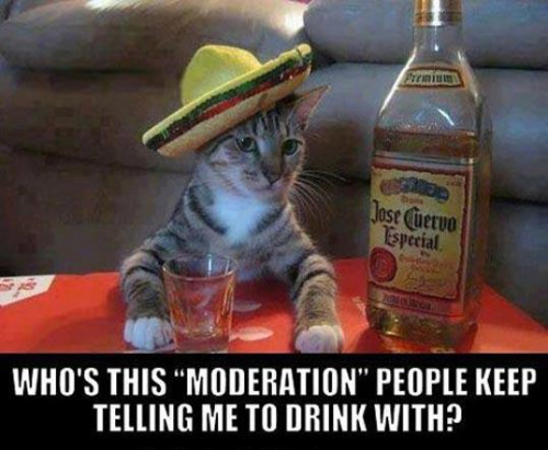 Image result for drinking in moderation funny