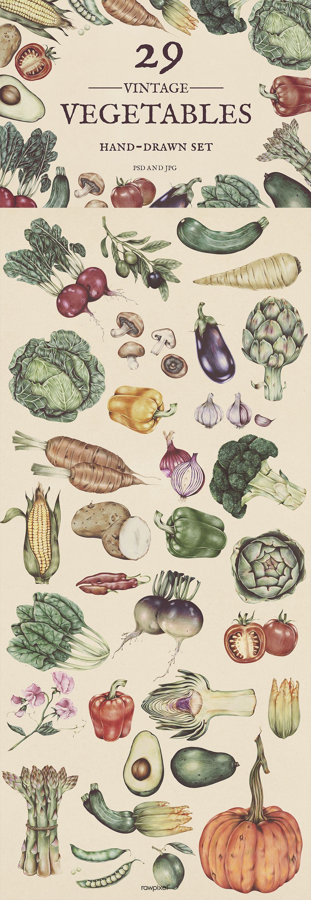 Download Free And Premium Royalty Free Images Of Vegetables Vectors At Rawpixel Com Free Images Royalty Free Images Web Design Resources