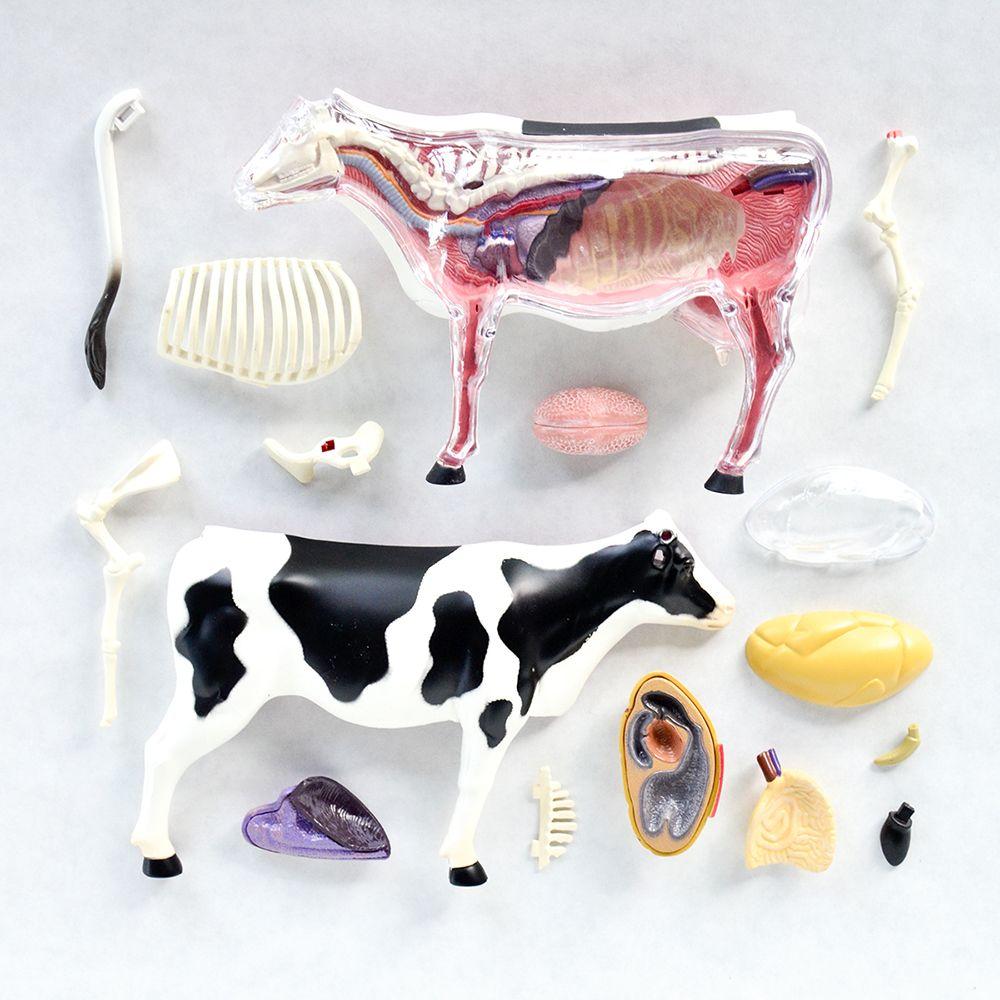 4d Vision Cow Anatomy Knoh Zakka Pinterest Anatomy And Cow