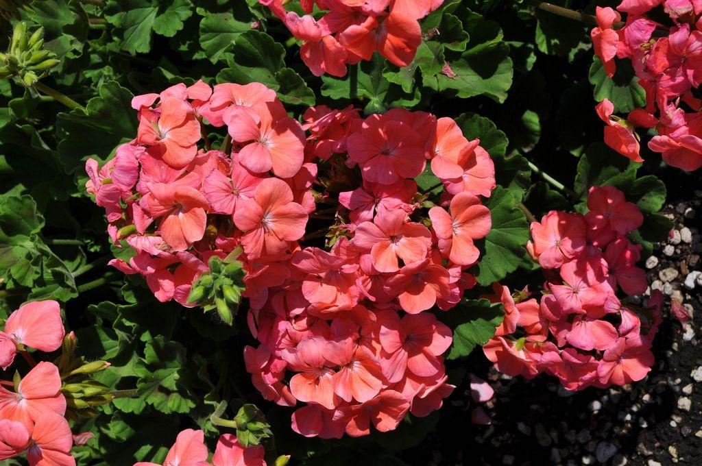 Annual Flower Trial Garden Releases List Of Winning Flowers