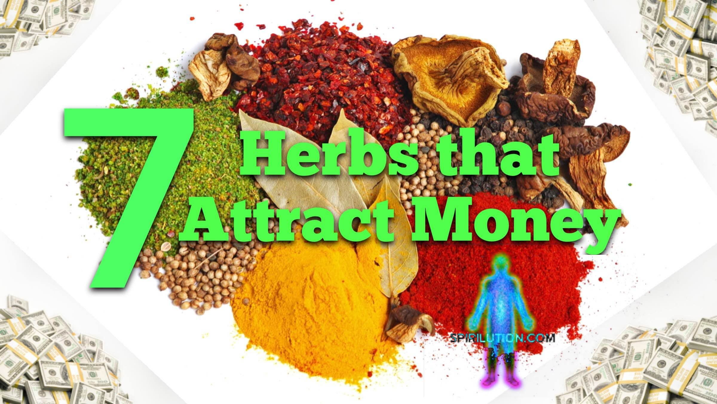 Attract Money Fast: 7 Herbs That Attract Money Fast!   Herbal