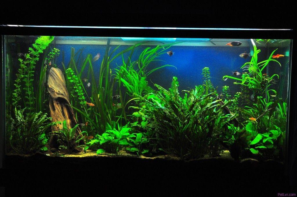Fish Tanks Freshwater Tropical Fish Aquarium Community Fish Tank Fresh Water Fish Tank Aquarium Fish