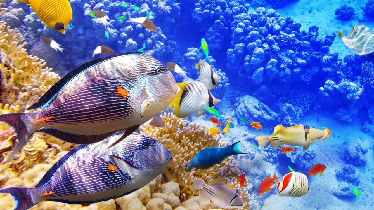 3 Hours Of Beautiful Coral Reef Fish Relaxing Ocean Fish The Best Rel Fish Wallpaper Tropical Animals Animal Wallpaper