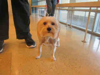 St Louis Pet Adoption Humane Society Animal Shelter Dog Adoption