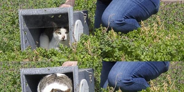 petition Demand an end to community cat bounty hunting in - community petition