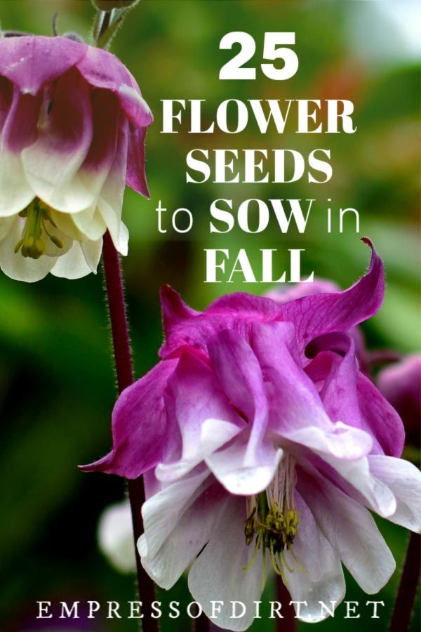 25 Flower Seeds to Sow in Fall