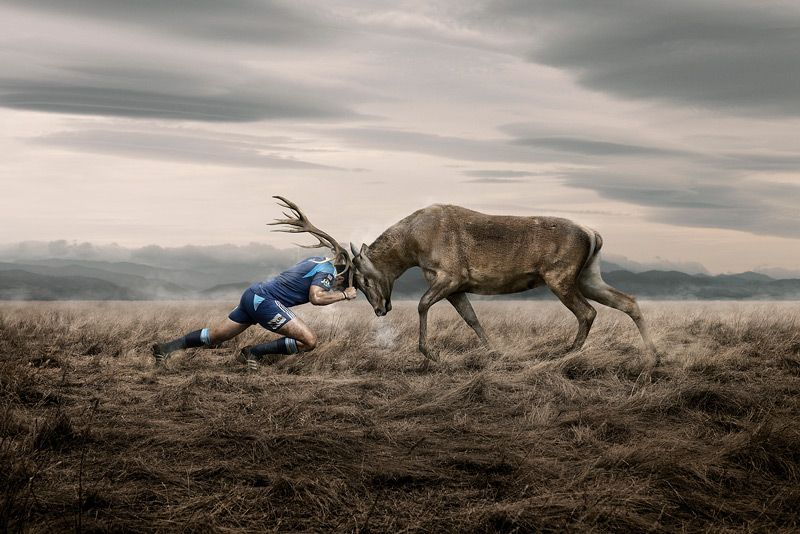 So Cool By Ross Brown Photography Rugby Wallpaper Advertising Photography Animals