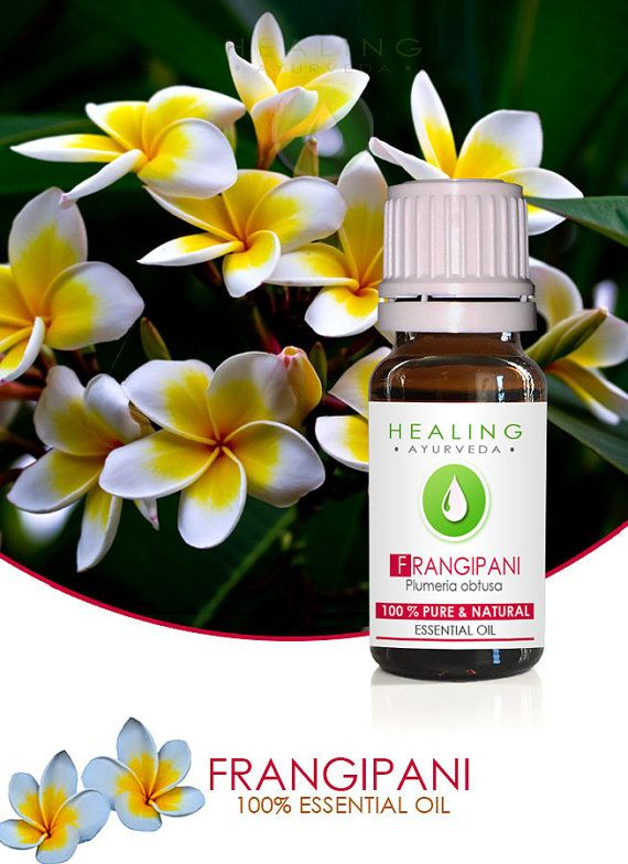 Frangipani Essential Oil Pure Natural Esssential Oil 100 Frangipani Essential Oil Pure Essential Oils Frangipani