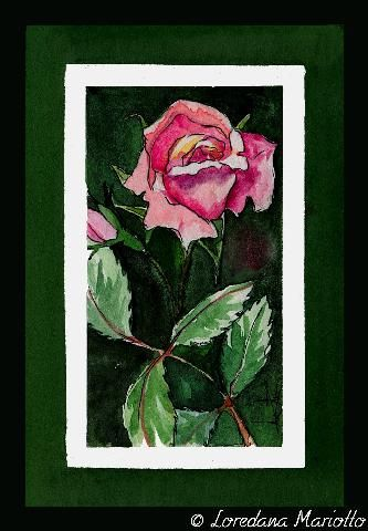 Rose   Flickr – Condivisione di foto!