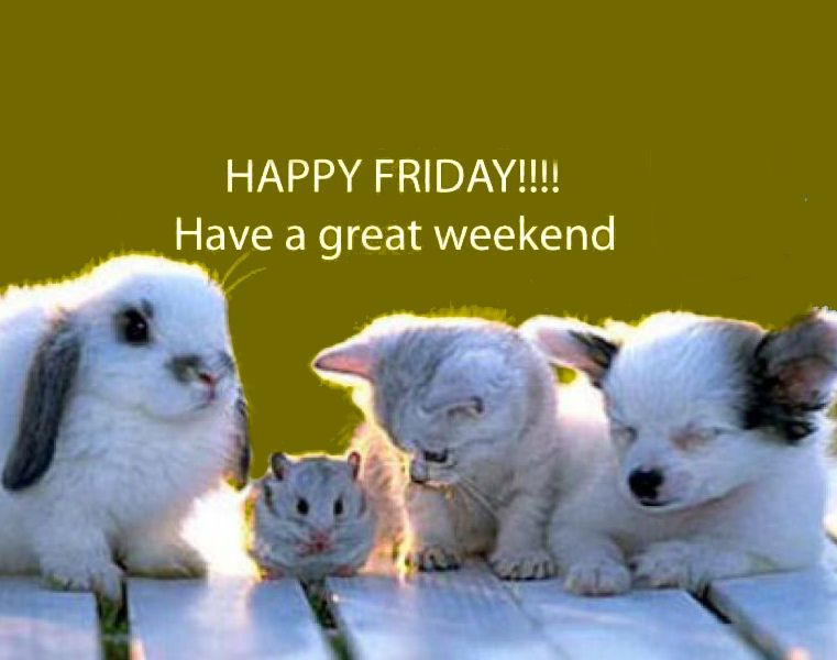 Have a great weekend quotes cute animals quote pets friday ...