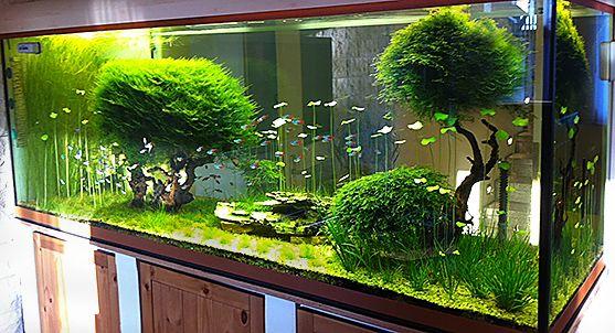 Kundenaquarien aquascaping shop f r naturaquarien for Aquarium einrichtungsideen