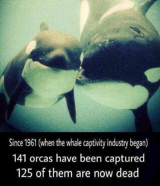 Blackfish documentary free whales in captivity humanity pinterest blackfish documentary free whales in captivity voltagebd Gallery