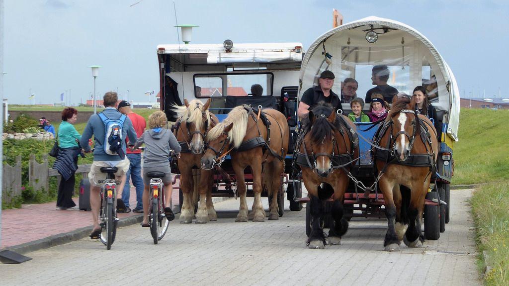 Pferdekutschen auf der insel juist juist urlaub in for Urlaub auf der insel juist