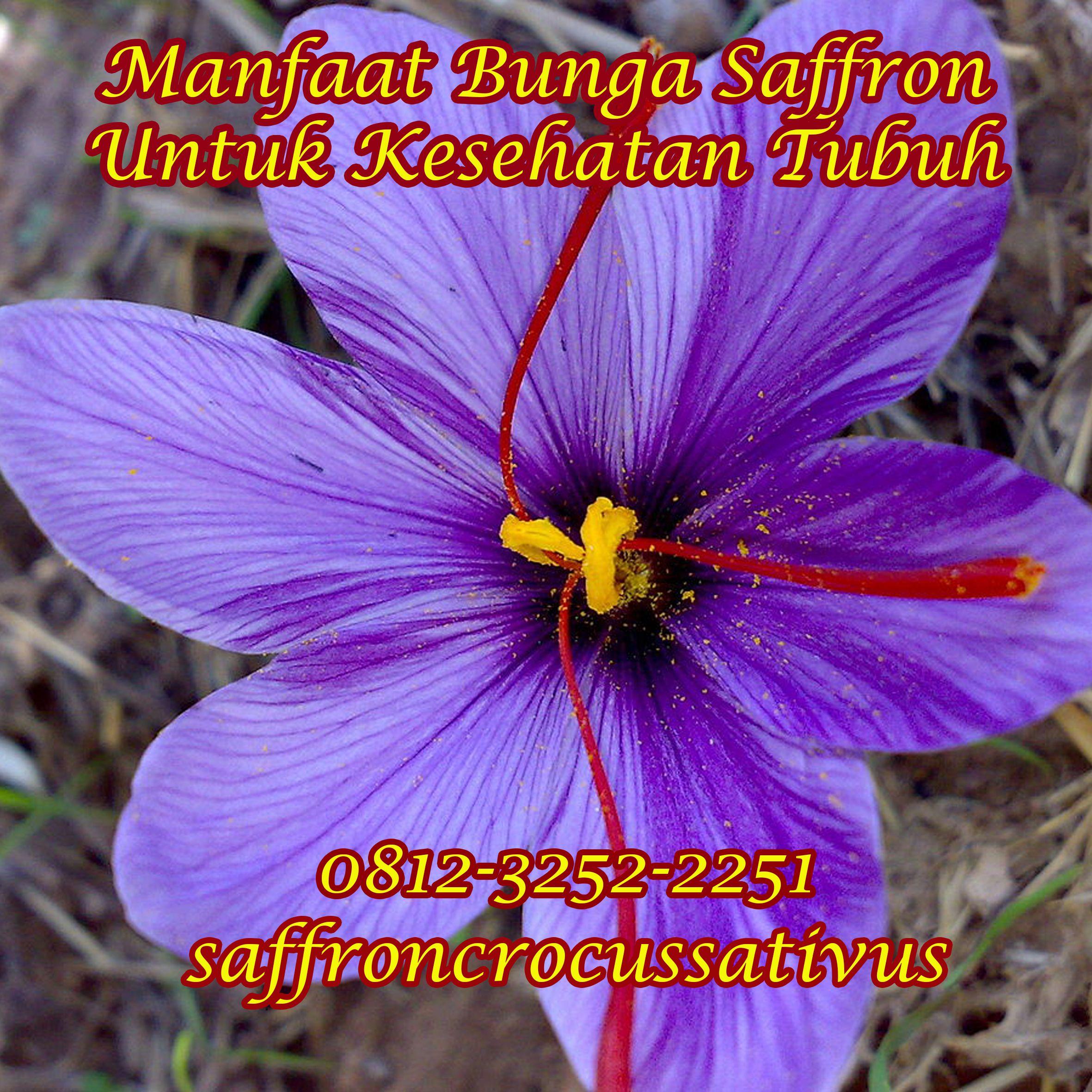 Original Wa 62 812 3252 2251 Tsel Jual Bumbu Masak Saffron Bekasi Tangerang Penjual Bunga Bunga Gambar Bunga