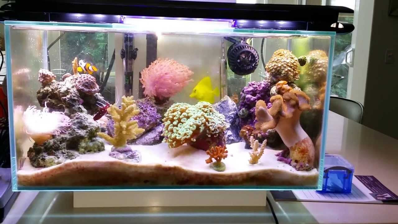 Freshwater aquarium fish nano - Fluval Edge 6 Gallon Nano Saltwater Reef Fish Tank Fully Packed