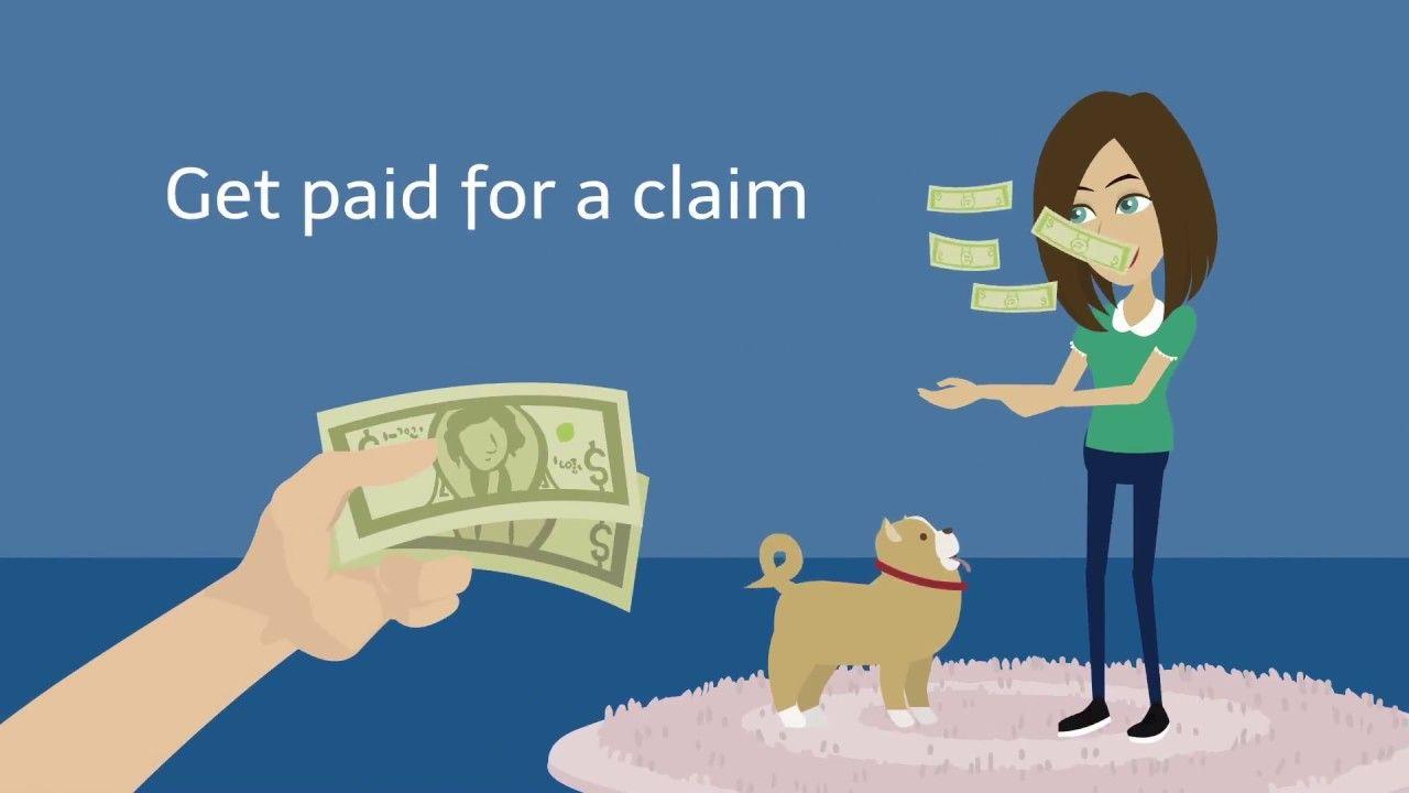 Save Hundreds On Your Dog S Vet Bills Dog Insurance Pet