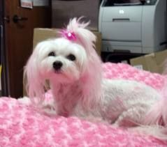 dog grooming rochester ny ackerleynelson (With images