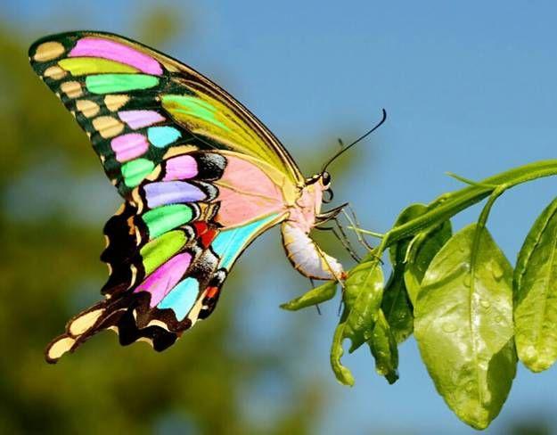 Стол бабочка фото