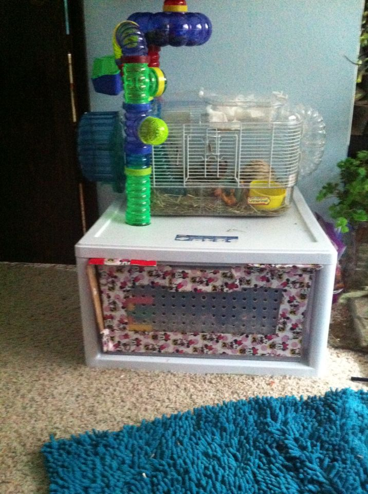 The Awesome Hamster Cage I Made Out Of A Sterilite Stackable Bin And Duct Tape Hamster Cage Hamster Stackable Bins