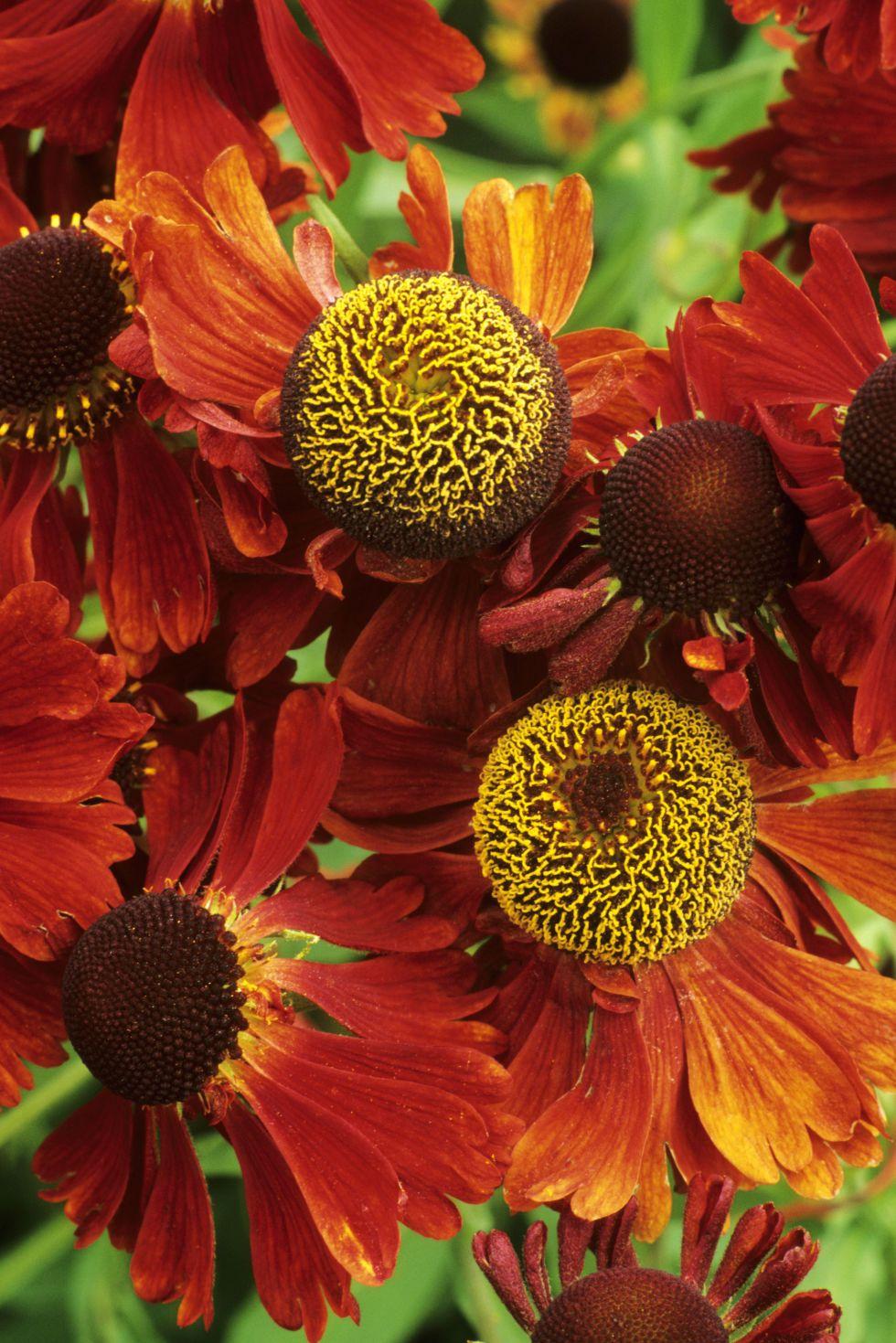 Épinglé par Sandy Bentley sur Flower Power | Pinterest