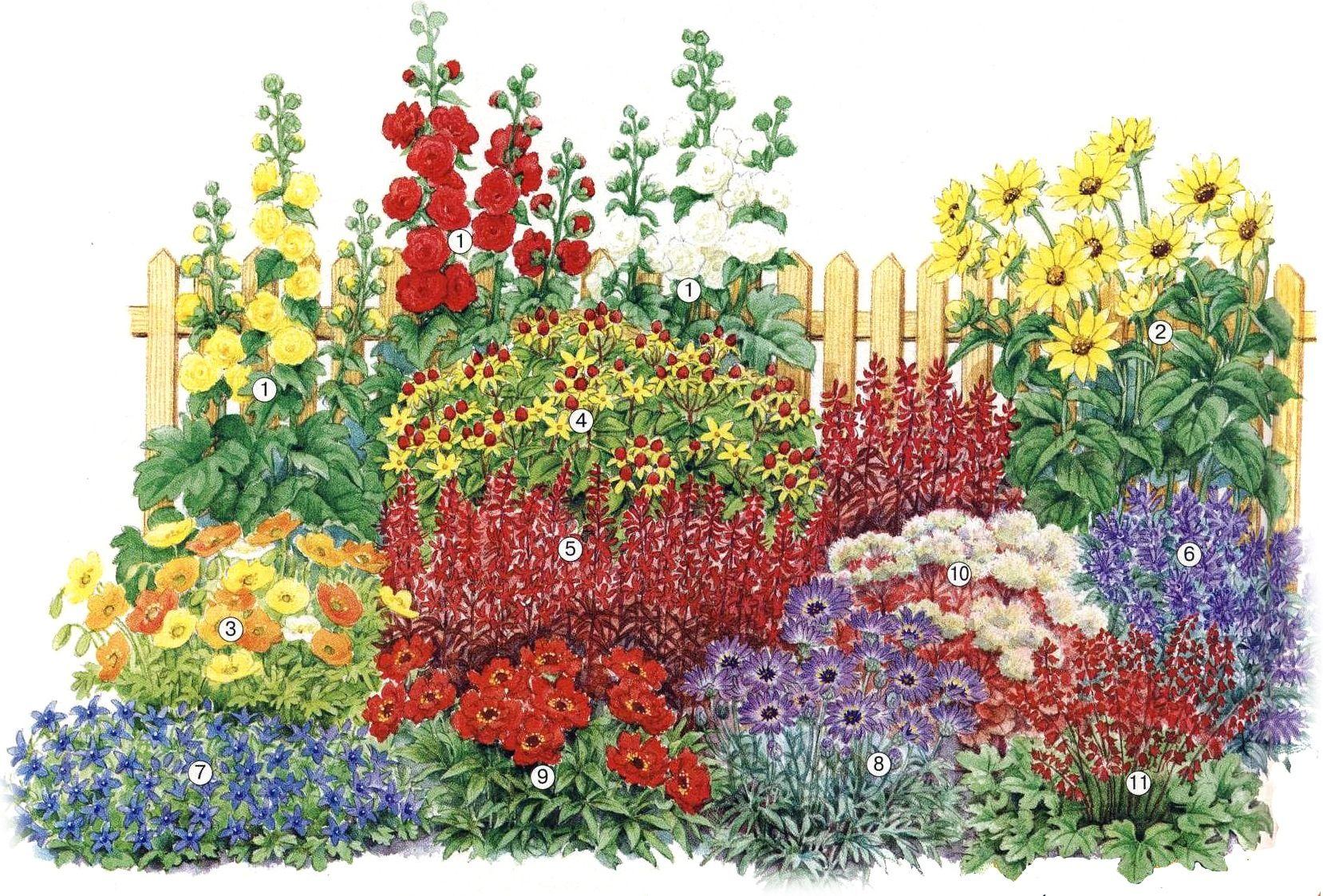 план схема посадки цветов вокруг газона