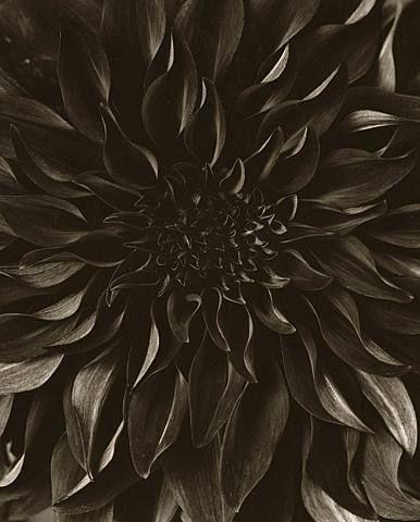 Tom Baril, Flower 824