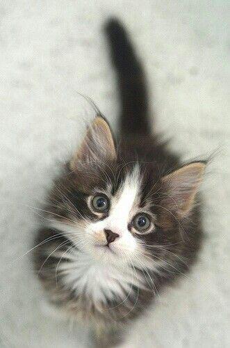 Do U Have Catnip Kittens Cutest Cute Cats Cute Animals