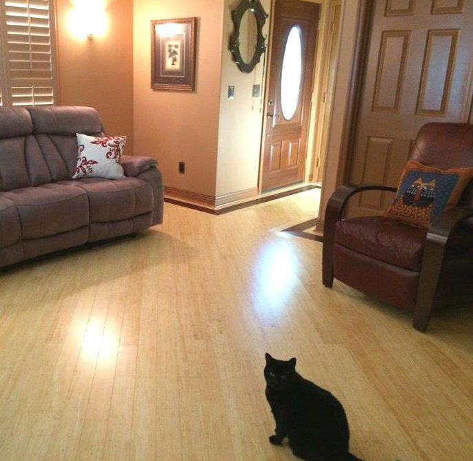 Kitty Lovin The Natural Renegade Hardwood Bamboo Flooring Pet