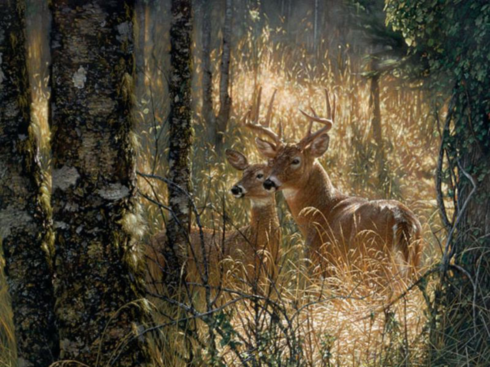 Download free deer wallpapers for your mobile phone by relevance download free deer wallpapers for your mobile phone by relevance voltagebd Images