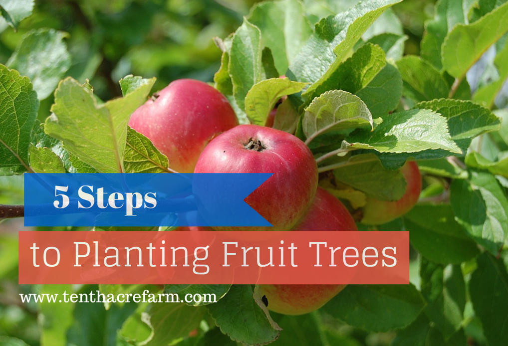 5 Steps To Planting Fruit Trees Planting Fruit Trees Fruit Trees Fruit Plants