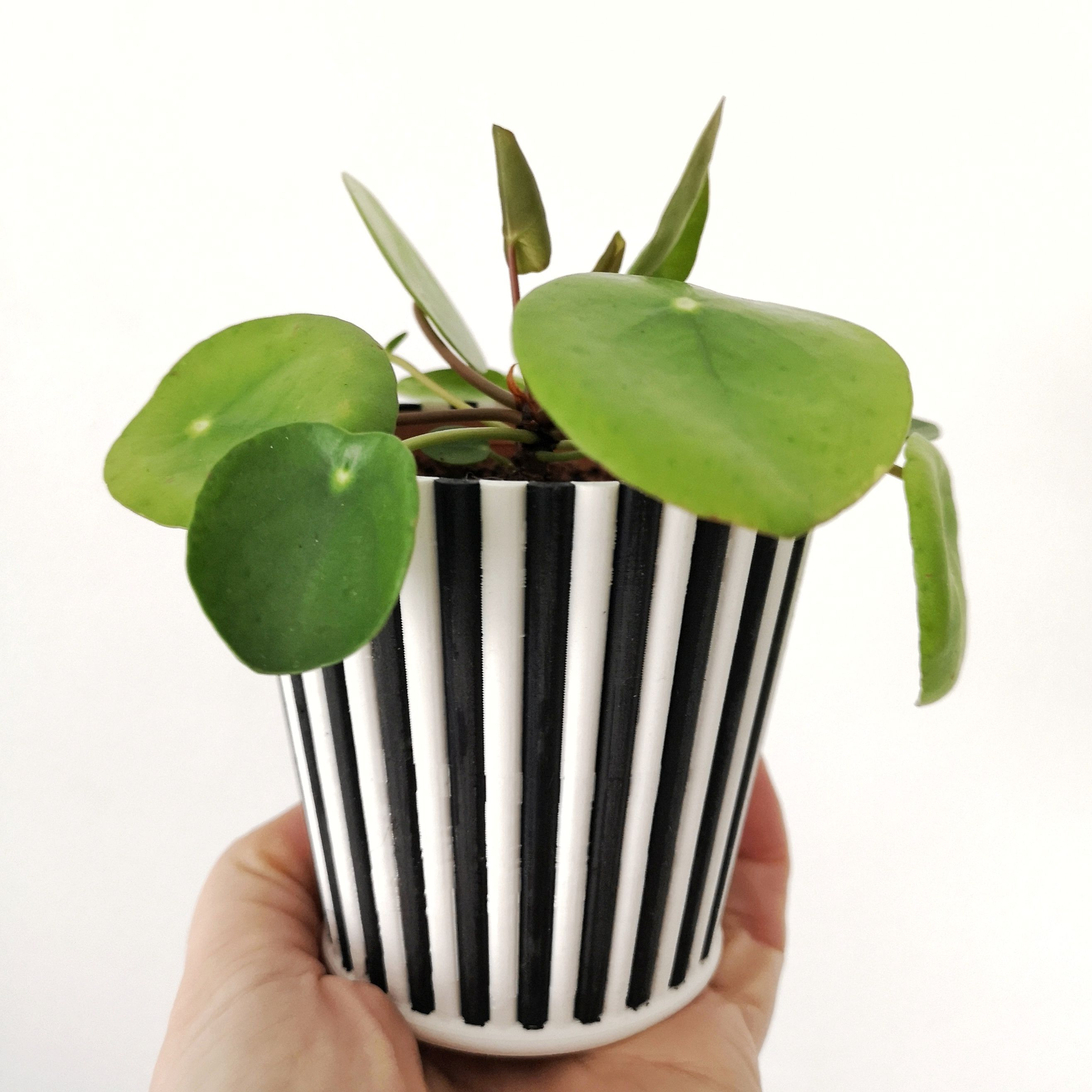 The Design Of This Stripey Planter Was Inspired By Vintage Popcorn
