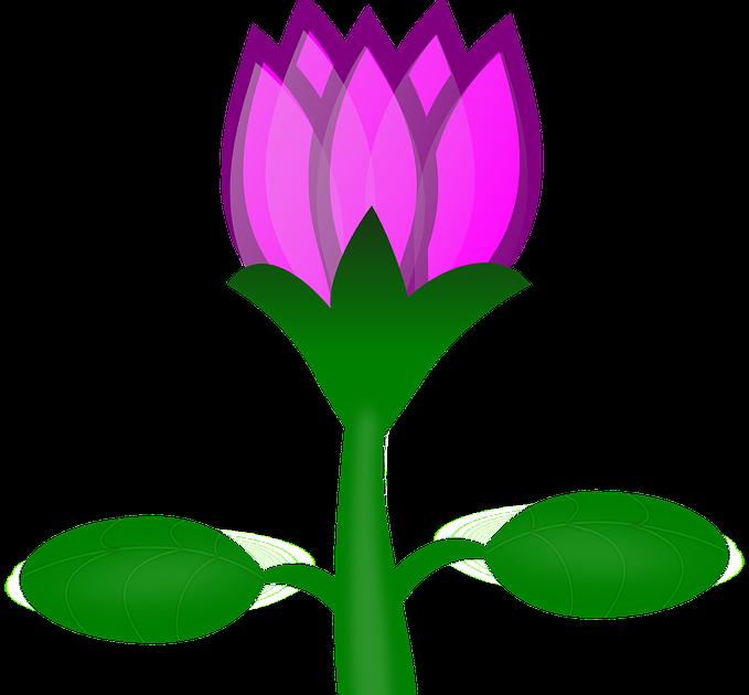 Paling Keren 30 Gambar Bunga Lotus Kartun Di 2020 Bunga Teratai Lukisan Bunga Bunga Ungu