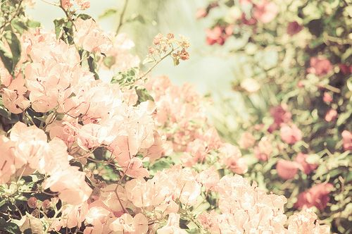 Blossoms Cherry Flowers Nature Photography Pink Pretty Flowers Beautiful Flowers Life Is Beautiful